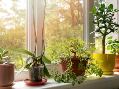 Indoor plants on sunny home windowsill
