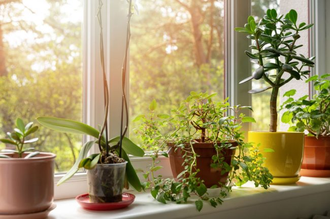 Indoor plants on sunny home windowsill