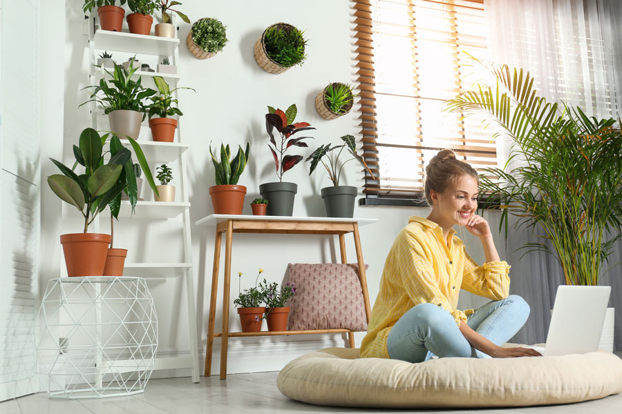 Young woman using laptop in room with different home plants
